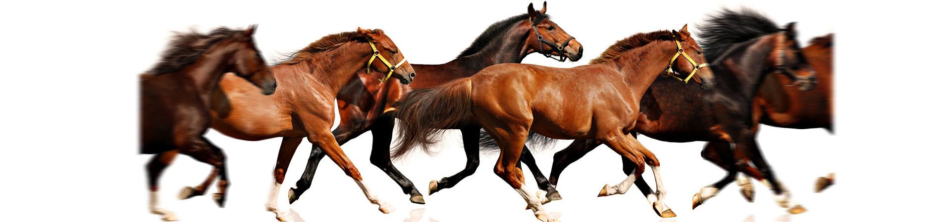 veterinario caballos castellon